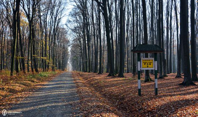 Pădurea Pătrăuți