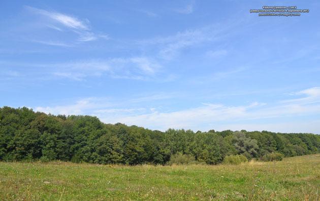 Pădurea Zamostea - Lunca